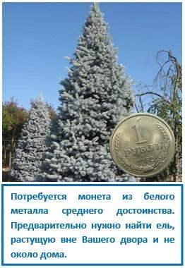 Потребуется монета из белого металла среднего достоинства. Предварительно нужно найти ель, растущую вне Вашего двора и не около дома.