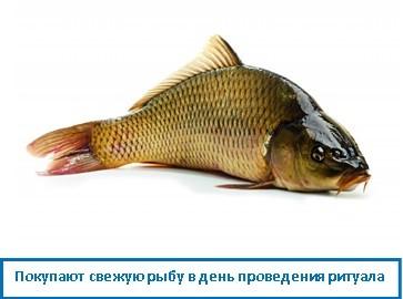 Покупают свежую рыбу в день проведения ритуала