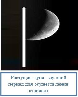 Растущая луна – лучший период для осуществления стрижки