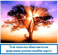 Тело человека обновляется согласно ритмам природы, как дерево