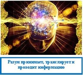 Разум принимает, транслирует и проводит информацию